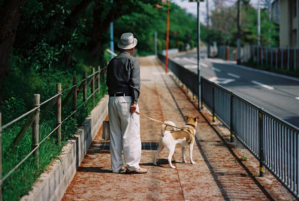 犬 散歩 おじいちゃん
