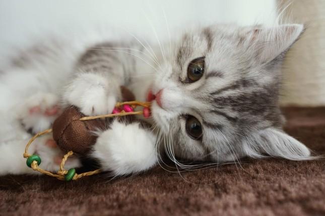 猫 可愛い 遊ぶ