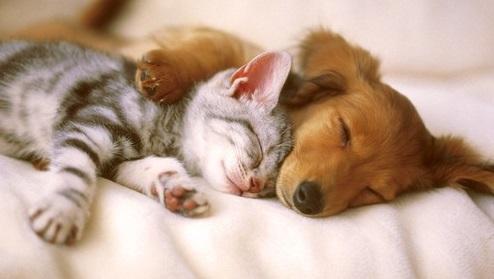 犬猫 寝顔 可愛い